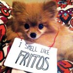 Ultimate Cute Dog Shaming Video