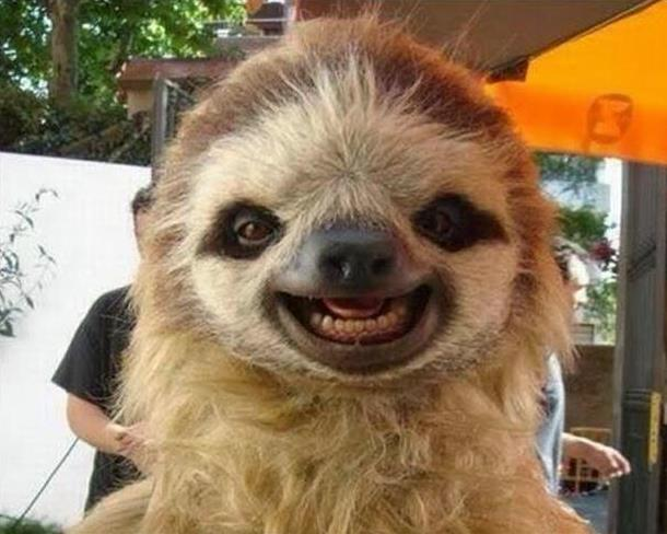 funny sloth selfie