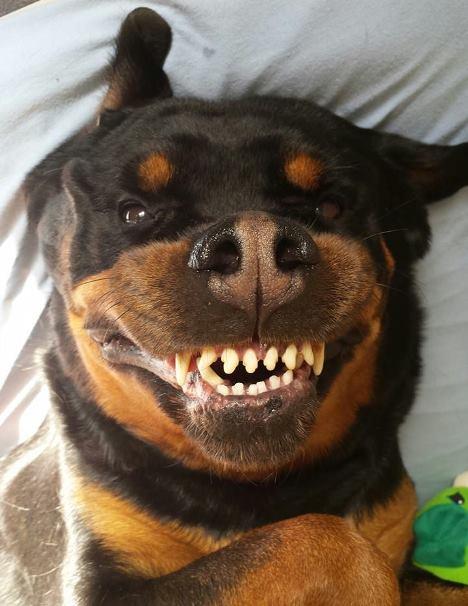 rothweiler selfie