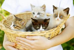Kitten-Care
