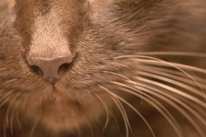 brown_whiskers