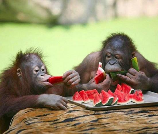 monkey quiz no 1