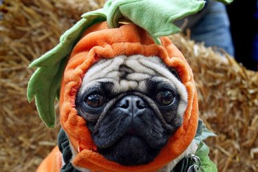 What Costume Should Your Dog Wear This Halloween?