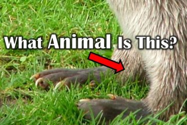 How Many Of These Animals Can You Recognize?