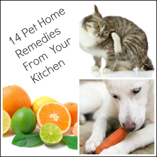 Home remedies for pets