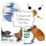 Unique Cat Toys to Challenge Your Cat's Brain