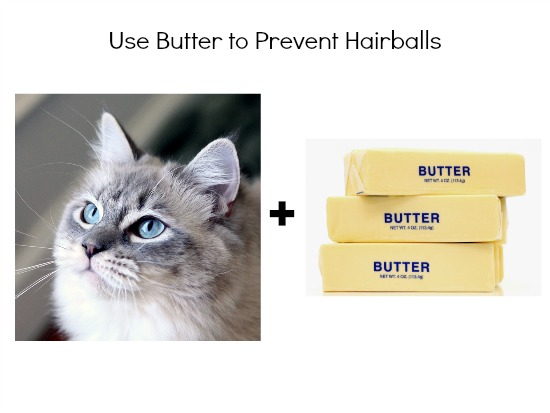 butter to prevent hairballs