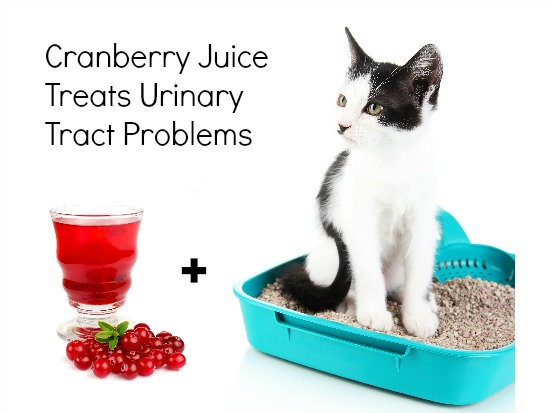 cranberry for cat urinary tract infection