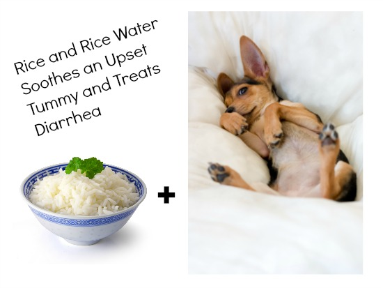 rice home remedy for pets