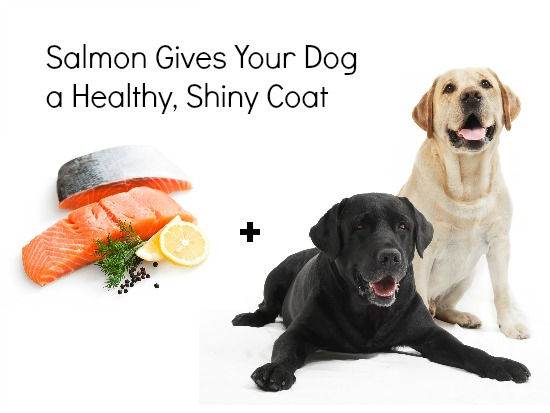 salmon pet food home remedy
