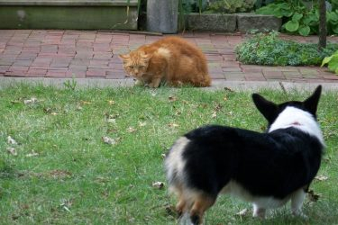 Wordless Wednesday: Corgi Meets Cat