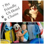 Top Pet-Friendly Hotel Chains