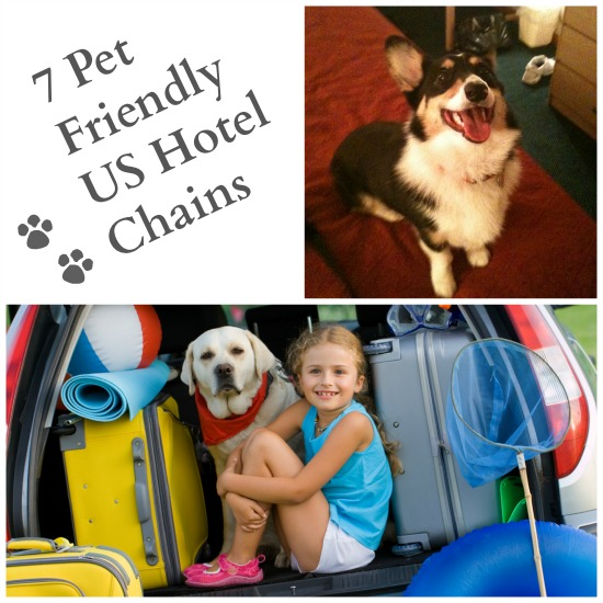 Top Pet-Friendly Hotel Chains - Some Pets