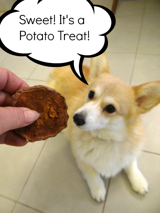 sweet potato corgi treat