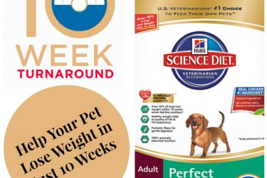 Help Your Pet Find The #PerfectWeight