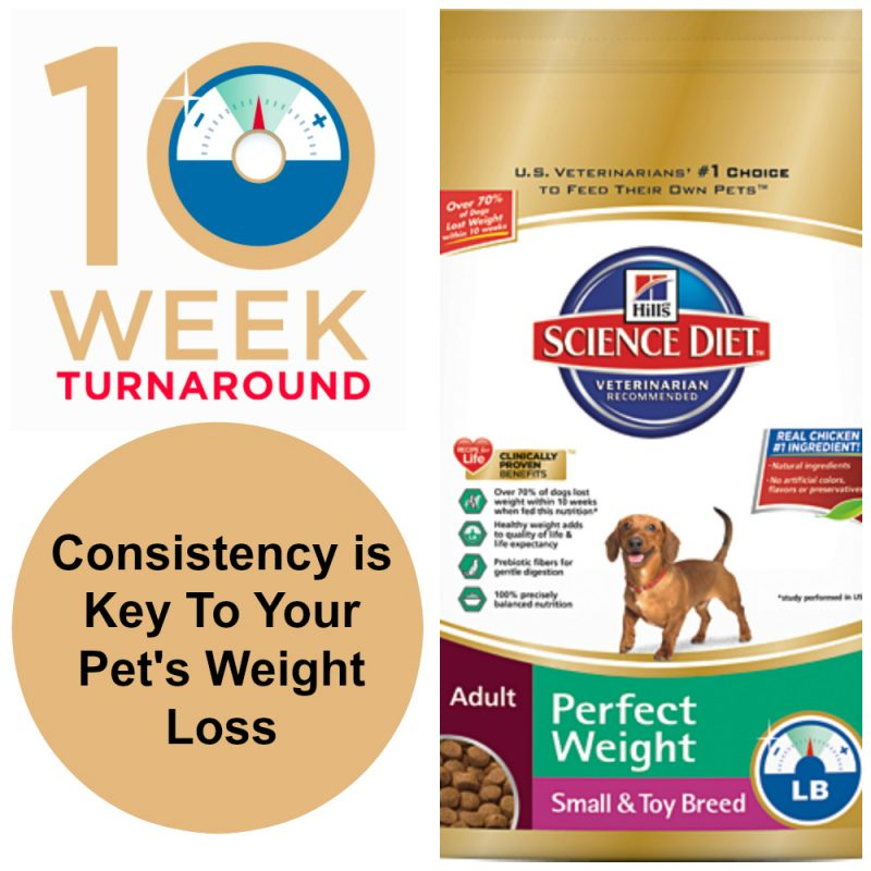 perfect weight loss for pets