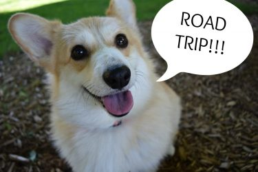Road Tripping to Blogpaws