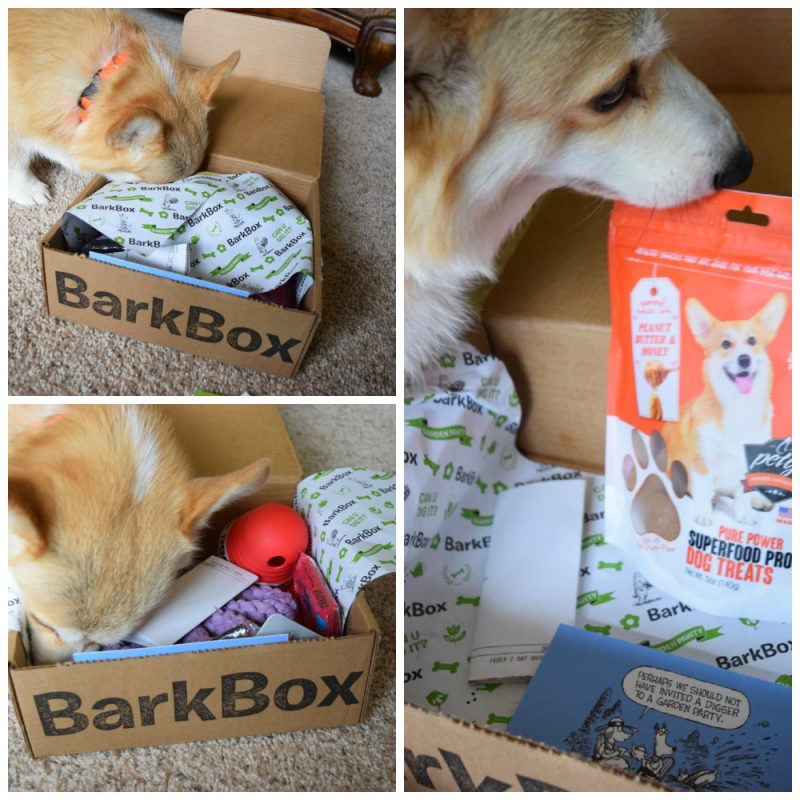 Eve Bark Box