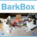 Our #BarkBoxDay Party