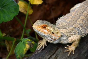 Thinking About Getting a Reptile? Learn #ReptileCare at petMD