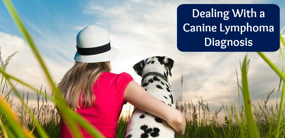 canine lymphoma decision making