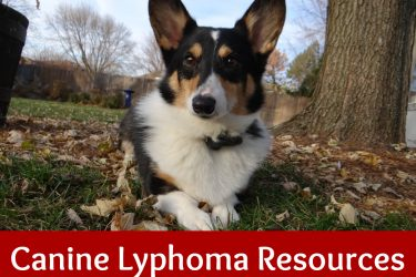 Canine Lymphoma Resources
