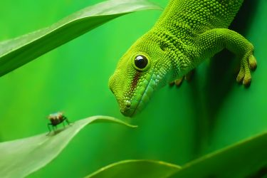 #ReptileCare List For Your New Lizard