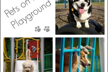 Pets on The Playground