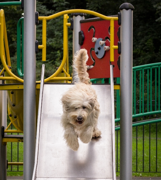 dog on playground slide