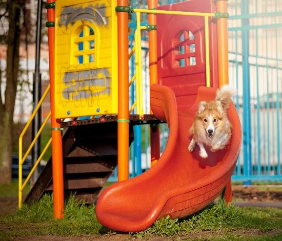 dog running on slide