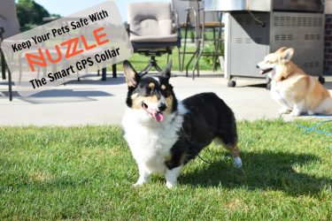 Keep Your Pet Safe With #NuzzleSmartCollar GPS Tracking
