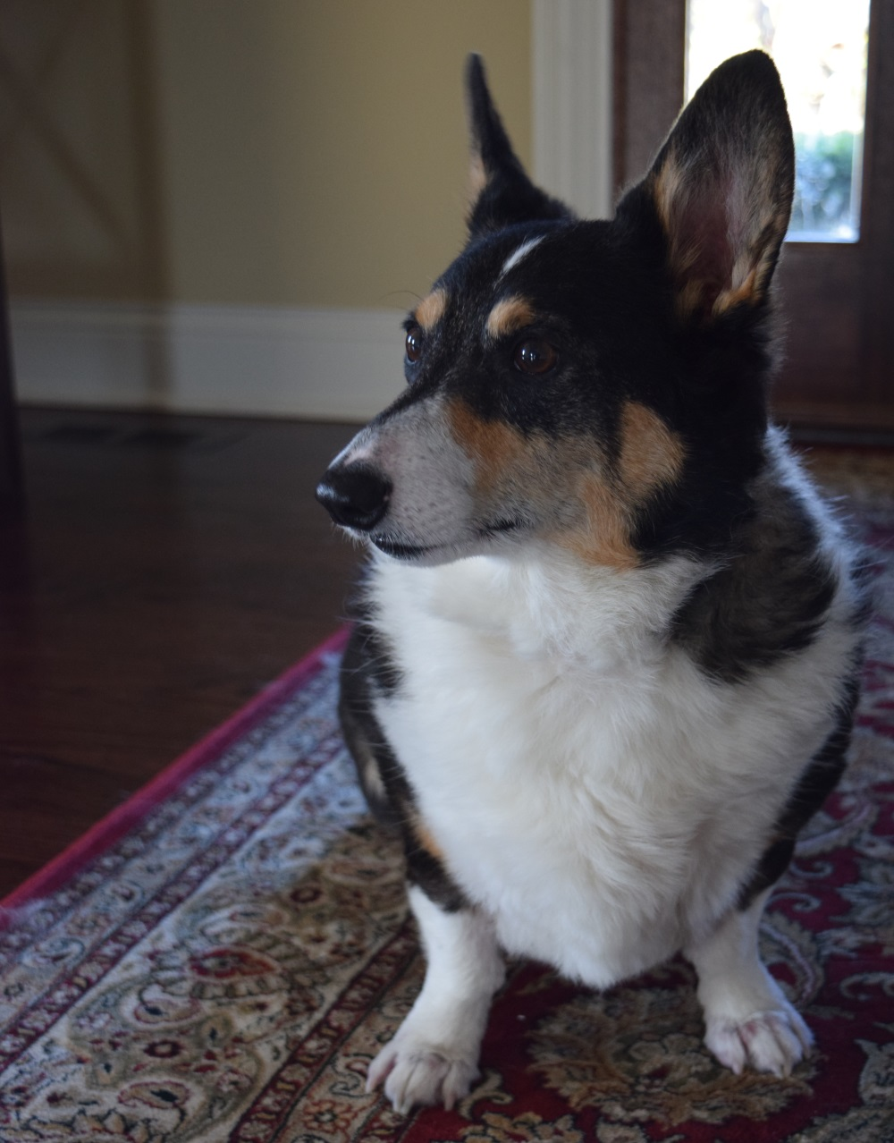 Supplements for Dogs with Lymphoma - Some Pets