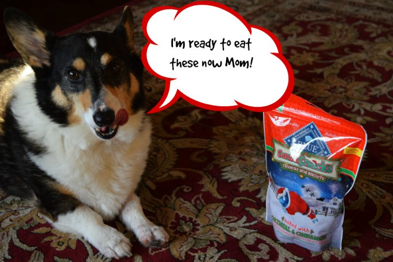 corgi with santa snacks