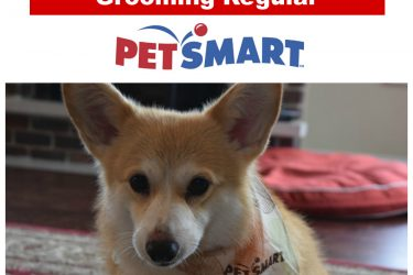 Eve Becomes a #PetSmartGrooming Regular Customer