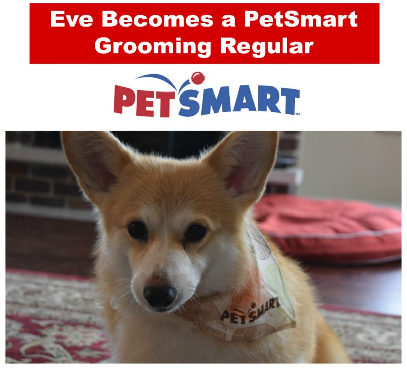 petsmart grooming services