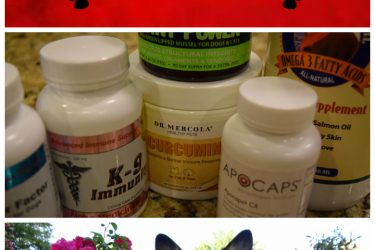 Supplements for Dogs with Lymphoma