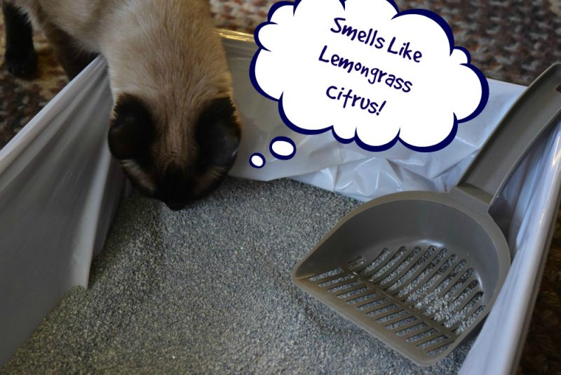 cat box smell