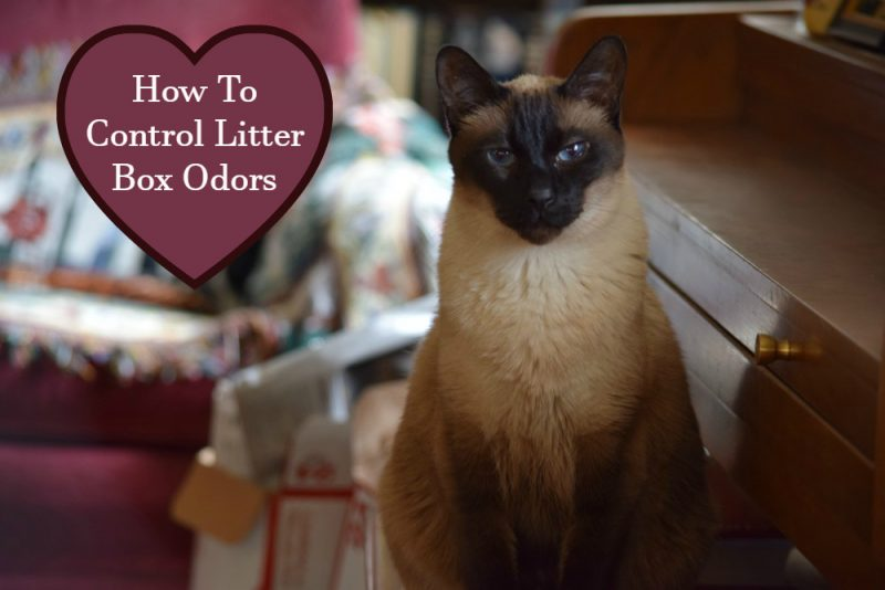 how to control litter box odors