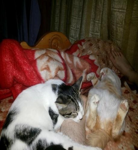 jo jo cat sleeping