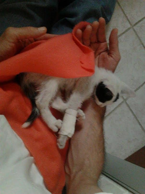 tommy kitten