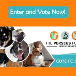 Cute For A Cure Calendar Contest For Charity