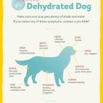 Dog Dehydration Signs, 5 Warning Signs of Dog Dehydration
