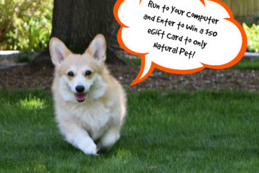 Giveaway! Only Natural Pet $50 Gift Card.