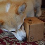 Blogger Challenge: DIY Treat Dispensing Dog Toy