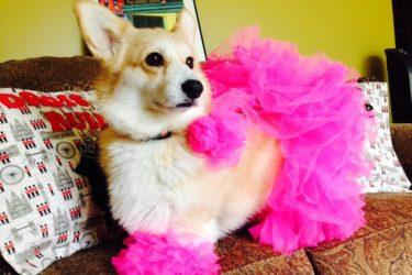Eve's Pet Fashion Show