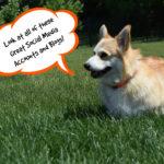 Favorite Pet Blogs and Social Media Links