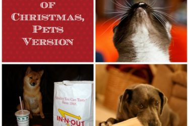 The Twelve Days of Christmas Pet's Version