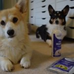 How To Safely Keep Your Dog Smelling Fresh