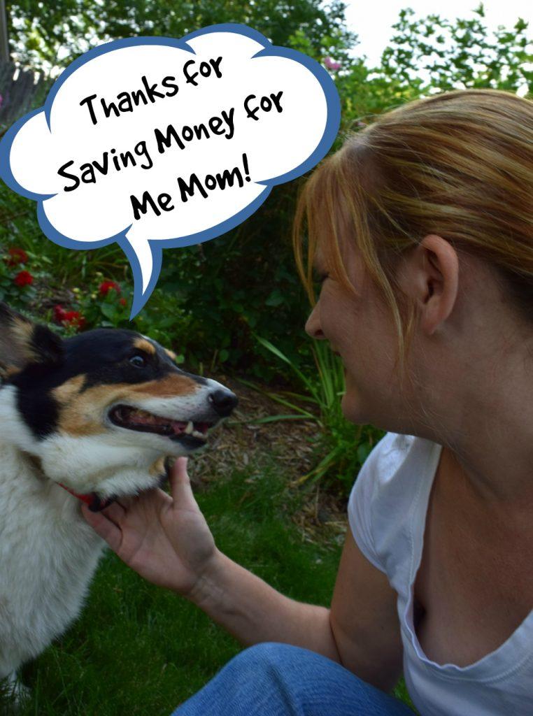 emergency pet fund