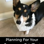 Planning for your Emergency Pet Fund